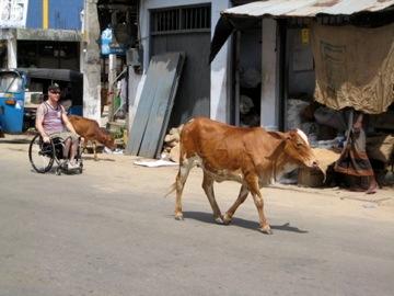 Curtis Palmer - travelling in Sri Lanka